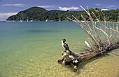 Abel Tasman Nationalpark, Südinsel, Cormoran, Neuseeland