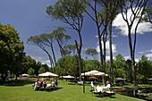 Wineyard, Boschendahl, South Africa
