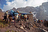 A trekking group and their mules arriving at the refuge Lépiney, Morocco, North Africa