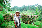 farmer in bali, rice, indonesia, asia, local, harvest time, digging, smiling, friendly, look in camera, basic food, eating, survive, palm, oxes, cases, carrying rice