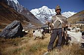 A shepherd watching sheep, Annapurna Massif, Nepal