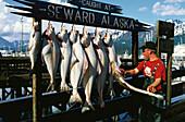 Man, fisherman, hanging up fish, Halibut, catch of the day, Seward, Resurrection Bay, Alaska, USA