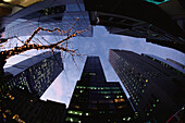 Madison Avenue, low angle view, with Chritsmas Decorations, Manhattan, New York City, USA