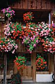 Farmhouse with geraniums, Beatenberg near Interlaken, Bernese Oberland, Canton of Bern, Switzerland