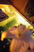 Ein Whirlpool, Spa mit Blumen und Blüten, Entspannung, Wellness, Hotel Oberoi, Urlaub, Mauritius, Afrika