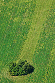 Green field with tree from above, Birds view, Landscape