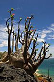 Close up of a plant, Madagascar, Africa