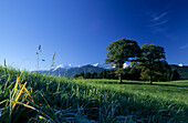 View over meadow with trees to snow covered mountains of Spitzing range, Leitzachtal, Upper Bavaria, Bavaria, Germany