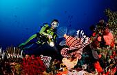 Lionfish and scuba diver, Pterois volitans, Bali, Indian Ocean, Indonesia