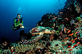 Hawksbill turtle and scuba diver, Eretmochelys imbricata, Bali, Indian Ocean, Indonesia
