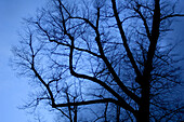 A bare tree in front of dark clouds on a winter evening