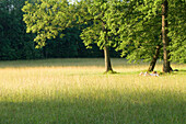 People sunbathing on meadow, palace garden Nymphenburg, Munich, Bavaria, Germany