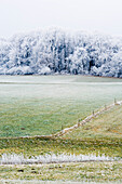 View over a meadow to a forest covered in hoar frost, Leoni, Bavaria, Germany
