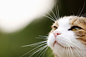 Close-up of a cat, Rieden, Bavaria, Germany
