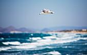 Seagull flighing over the ocean, Kos Island, Greece