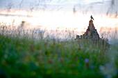 Wildflower meadow and Aviator Monument, Wasserkuppe Mountain, Rhoen, Hesse, Germany
