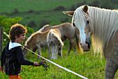 Boy feeding Haflinger horse on green pasture, Meura, Thuringia, Germany