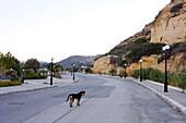 Dog on empty street at low season, Winter, Matala, Crete, Greece