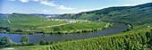 River Moselle with wine village Trittenheim, Mosel Saar Ruwer, Rheinland- Pfalz, Germany