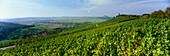 Castle Lichtenberg with vineyards, Oberstenfeld, Baden-Württemberg, Germany