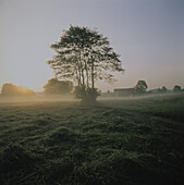 Meadow with tree in the morning fog
