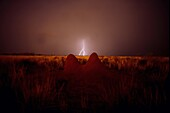 Termite hill and lightning, Thunderstorm, Bitterwasser, Namibia, Africa