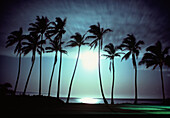 Palms in Moonlight, Oahu, Hawaii