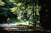 Cyclist near Buchenwald, Ruegen, Mecklenburg-Western Pomerania, Germany