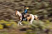cowboy riding, Oregon, USA