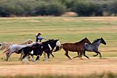 cowgirl riding, Oregon, USA