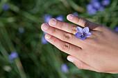 Blue Bell Flower Ring on Hand, Henne Strand, Central Jutland, Denmark