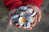 Holding Shells in Hands, Henne Strand, Central Jutland, Denmark
