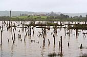 Swamp and landscape, Parque Natural de Oyambre, near Trasvia, Costa de Cantabria, Cantabria, Spain