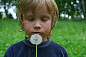 portrait, young boy blowing a dandelion clock, seeds, outdoor, green field, park, MR