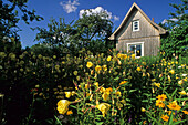 Flowers blooming in front of a summerhouse in a allotment garden