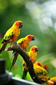 Baby parrots, Jurong Bird Park, Singapore