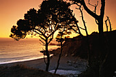 Coastal landscape at sunset, Fort Ross, Route No. 1, Sonoma Country, California, USA