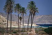Palm trees on the beach, El Playazo Beach near Rodalquilar, Parque Natural Cabo de Gata, Andalusia, Spain
