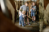 Three boys (2-9 years) feeding cattle with hay in a barn, Walchstadt, Upper Bavaria, Bavaria, Germany, MR