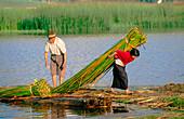 Collecting totora canes in the Laguna de Colta, Incas sacred space. Chimborazo province. Ecuador