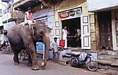 Elephant in the street of Ahmedabad, Gujarat, India