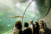 Aquarium. The Ocenari (underwater tunnel). Barcelona. Cataluña. Spain