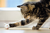 Young domestic cat playing with toy mouse