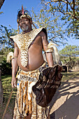 The Chief Biyela dressed with his ceremonial leopard skin. Simunye zulu village where visitors can be accomodated in zulu style. Kwazulu-Natal province. South Africa