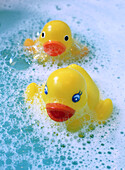 Bathtub, Bathtubs, Childhood, Color, Colour, Contemporary, Duck, Ducks, Float, Floating, Foam, Foamy, Froth, Hygiene, Infantile, Innocence, Innocent, Lather, Object, Objects, Pair, Rubber duck, Soap, Suds, Thing, Things, Two, Two items, Vertical, Water,