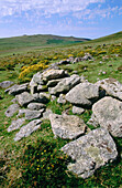 Stone remains of a group of iron age huts. Dartmoor. Devonshire. UK