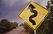 USA, New Mexico, Sila National Forest. Highway curve sign full of bullet holes. NM route 15.
