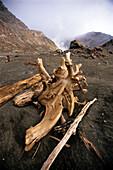 Driftwood on White Island, North Island, New Zealand