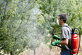 Farmer treating fruit trees with sprayer (Insecticides, Pesticides). Apple trees. Gipuzkoa, Euskadi. Spain.