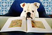 Amusing, Animal, Animals, Art, Arts, Book, Books, Chair, Chairs, Color, Colour, Contemporary, Dog, Dogs, Education, Funny, Horizontal, Humor, Humorous, Humour, Indoor, Indoors, Inside, Interior, Learn, Learning, Look, Looking, Odd, One, One animal, Open,